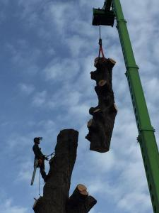 Climbers Way Tree Care Tree Surgeons