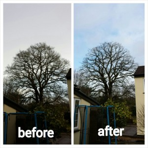 Before & After Tree Surgery